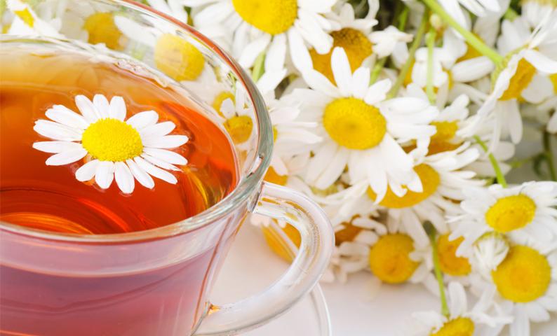 uống trà hoa cúc giảm đau bao tử được không
