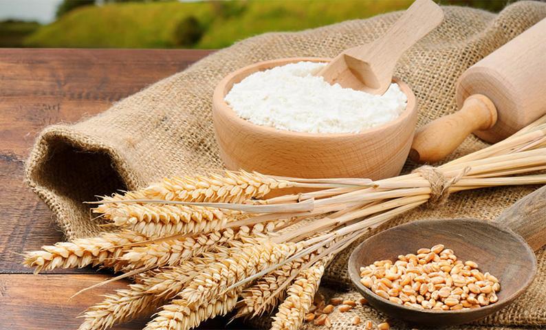 đau bao tử có nên ăn bột lúa mỳ