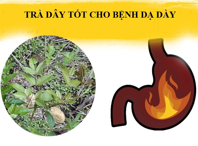 Uong Tra Day Tot Cho Benh Da Day